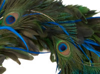 Peacock_wreath_Cu
