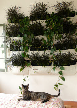 Living-walls-indoor-wall-planter